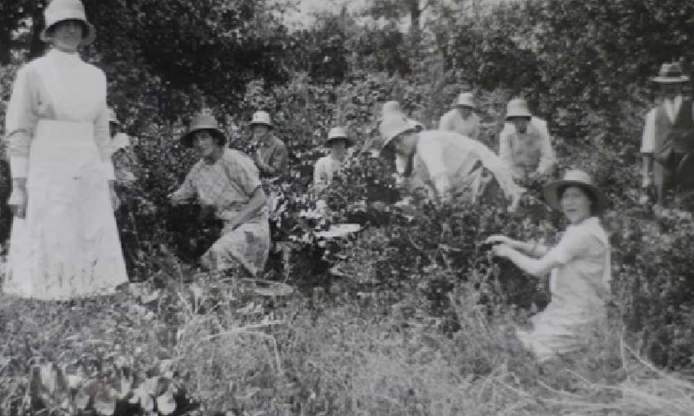 A group of women haymaking in the summer