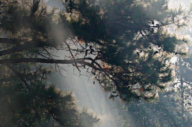 Light coming through a tree