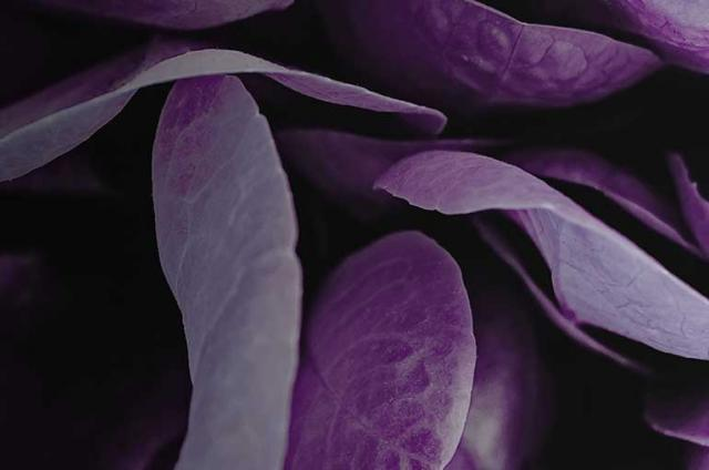 Petals from a purple flower